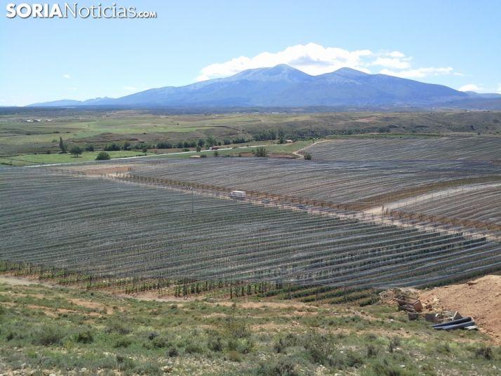 Huertos en Valverde de Ágreda. Manzanos.