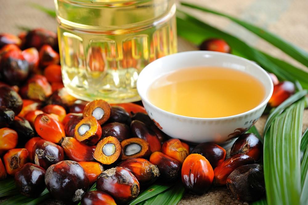Educación aclara que en los comedores de CyL no se usa aceite de palma
