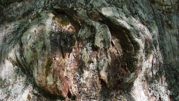 Cinco bosques mágicos que visitar en Castilla y León    Imagen 2