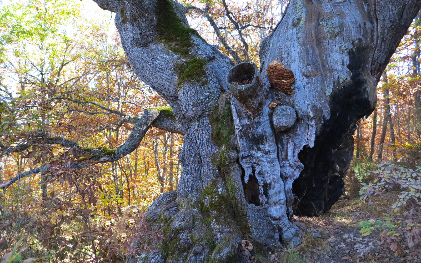 Cinco bosques mágicos que visitar en Castilla y León    Imagen 5