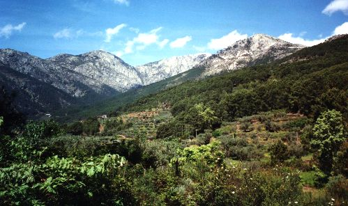 Cinco bosques mágicos que visitar en Castilla y León    Imagen 3