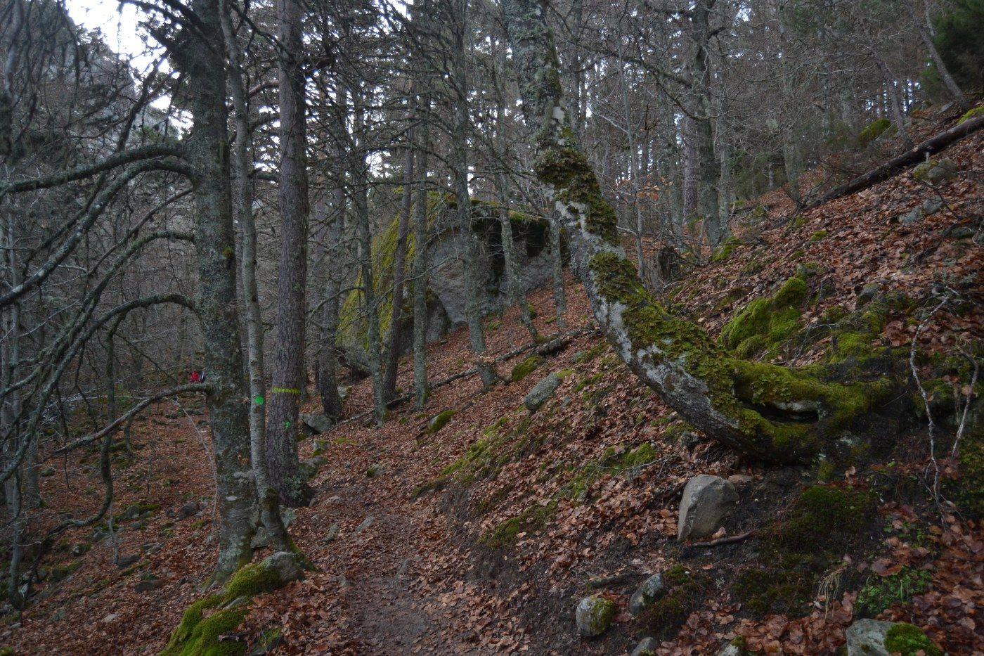 Cinco bosques que visitar en Soria en el Día Internacional de los Bosques | Imagen 4