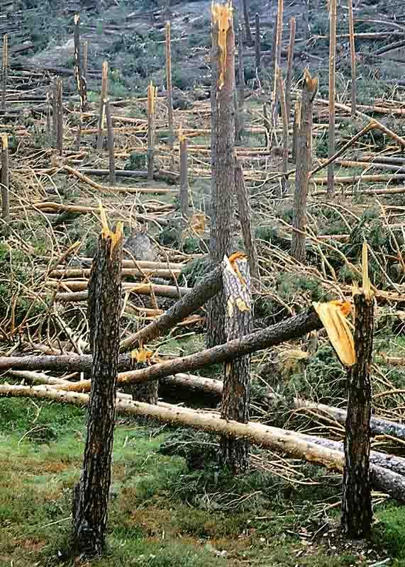 Consecuencias del tornado del 1 de junio de 1999.