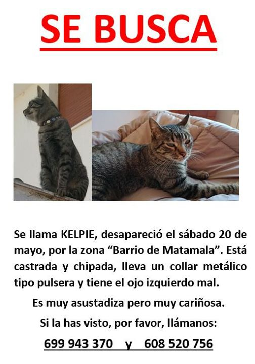Adnamantina pide ayuda para encontrar a su gata perdida | Imagen 1